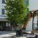 Großbaumbepflanzung Gartenbau Schmaußer GbR