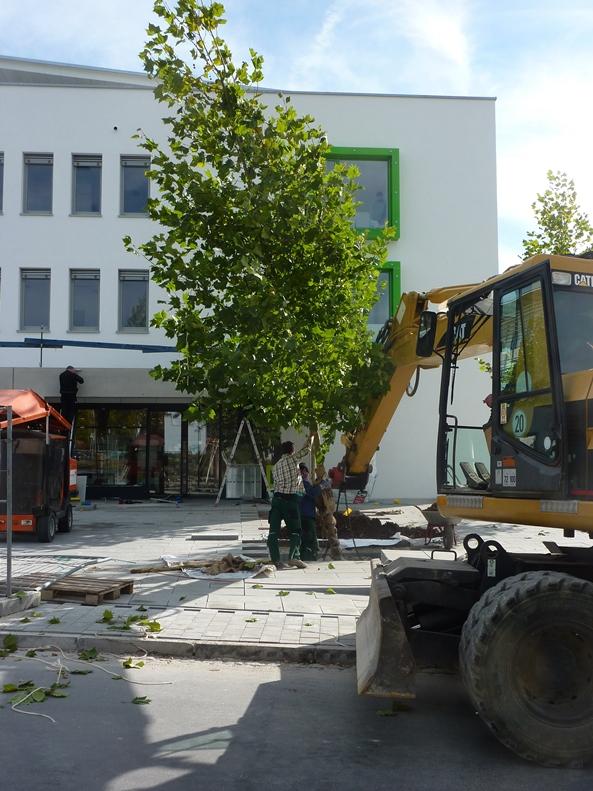 Großbaumbepflanzung Gartenbau Schmaußer